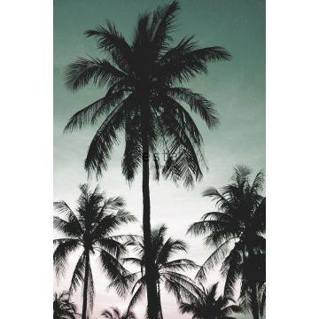 fototapet palmetræer benzingrønt fra ESTA home