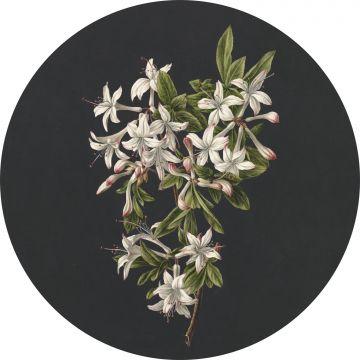 selvklæbende fototapet rundt blomstring lyserosa og sort fra ESTA home