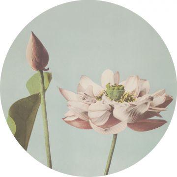 selvklæbende fototapet rundt lotusblomst skinnende lyserødt og gråblåt fra ESTA home